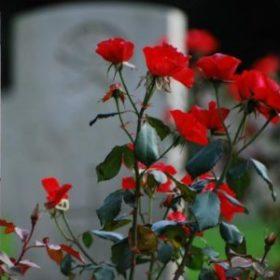 Báseň Uvadlý květ